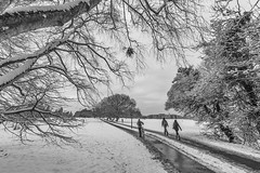 20130125_F0001: Week of snow finishing (wfxue) Tags: road trees winter people blackandwhite bw snow cold ice wet bike walking landscape cycling melting branch path candid melt footpath pushing