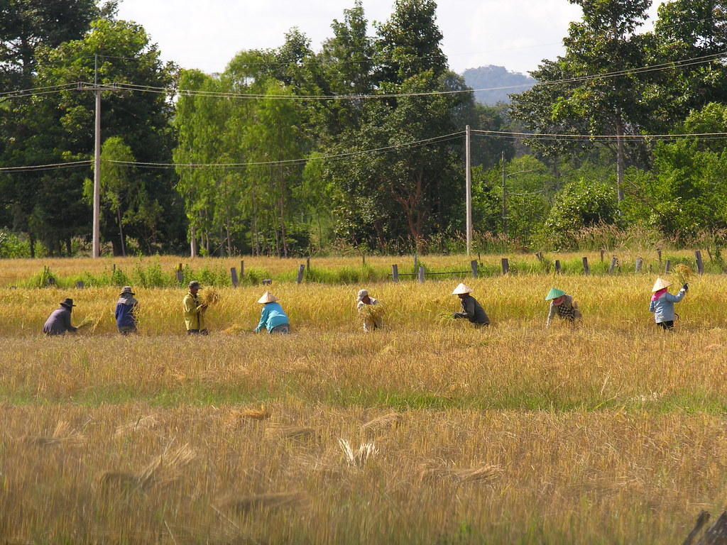 Working the fields, Mukdahan, Northeast Thailand