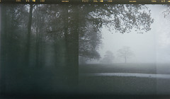 the silence (biancavanderwerf) Tags: mist film dutch analog forest landscape holga woods doubleexposure bianca analoog analoge