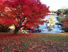 Sankeien Vol.12 (nineblue) Tags: autumn japan japanesegarden autumnleaves hiroshima autumncolors    sankeien