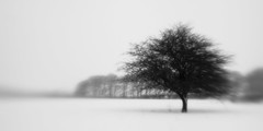 Nether Wood 43 - Northwest Field (Adam Clutterbuck) Tags: wood uk greatbritain trees winter england blackandwhite bw snow monochrome lensbaby landscape mono blackwhite unitedkingdom britain somerset bn elements gb bandw mendips charterhouse nether greengage netherwood adamclutterbuck showinrecentset netherwoodproject