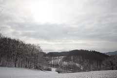 Grey days (Mandy Perez) Tags: schnee snow cold forest germany landscape deutschland grey day silent nieve alemania schwarzwald