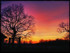 I dreamed a dream (@sage_solar) Tags: sunset red orange tree field silhouette clouds sussex gate flickrandroidapp:filter=none