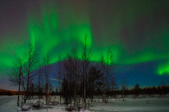 Northern lights (Thierry Hennet) Tags: longexposure blue winter sky snow tree green night zeiss finland stars landscape outdoors sony aurora lapland moonlight northernlights luosto a900 coldtemperature cz1635mmf28