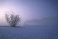 Steam, fog and sunrise (Moffat Road) Tags: railroad morning snow cold tree fog train sunrise dawn utah ut heber steam unionpacific 280 freighttrain hebervalleyrailroad liftingfog photofreight no618