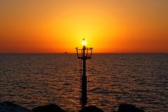 #850E5405 - Its their bed time (Zoemies...) Tags: sunset sea beach nature silhouette dubai wildlife gulls jumera zoemies