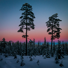 The eastern sky (Bangern) Tags: winter sunset sky snow color tree oslo pine forest square twilight samsung spruce silhouett lillomarka nx210
