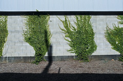 Wall Bushes (bhop) Tags: california city plants los weeds fuji angeles fujifilm bushes culver x100