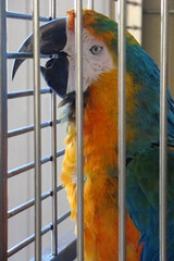 Sleepy Girl (Vegan Feast Catering) Tags: sister macaw lovebug 47years