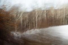 Birches (trekok, enjoying) Tags: motion blur train m birch 22613 015jpg elementsorganizer