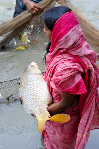 A fish farmer holding a carp from her pond in Khulna, Bangladesh. Photo by Finn Thilsted, 2012.