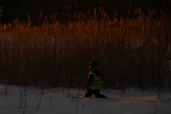 Knee deep (Basse911) Tags: winter boy snow reed suomi finland evening march hanko nordic hang