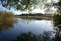 Kleiner See (ThomasKohler) Tags: autumn lake tree fall nature see herbst natur baum mecklenburg feisneck seenplatte mecklenburgerseenplatte warenmüritz mecklenburgischeseenplatte warenmueritz feisnecksee warenandermueritz