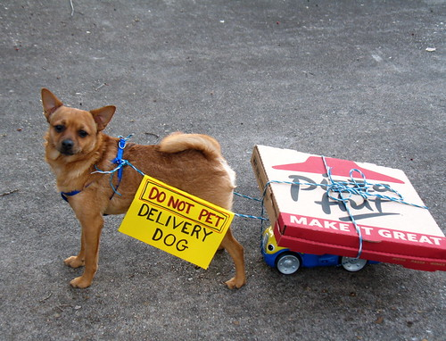 Pizza Delivery by dog.happy.art, on Flickr