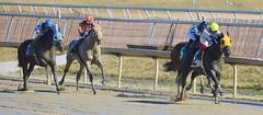 2013-02-14 (73) r2 J. D. Acosta on #2 Jack On the Rocks (JLeeFleenor) Tags: horses caballo cheval photography photos uma cal jockey horseracing jinete cavallo cavalo pferd e