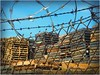 wood and wires (BalineseCat) Tags: wood chicago fence wire south side chain link pallets razor