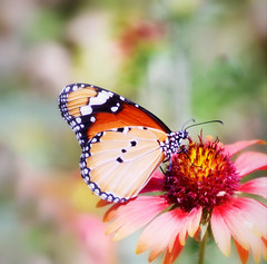 Happy Spring! (Amima Sayeed) Tags: flower nature butterfly spring colours navroz