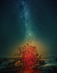 The Milky Way over the Burning Bush (Stuck in Customs) Tags: world california county travel usa lightpainting west digital america stars photography coast blog high bush unitedstates desert dynamic stuck pacific space united north august galaxy valley mojave processing northamerica deathvalley imaging states westcoast range hdr tutorial trey travelblog 2012 customs milkyway deathvalleynationalpark inyo ratcliff inyocounty hdrtutorial stuckincustoms treyratcliff stuckincustomscom nikond800