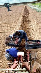 0020VIÑEDOS-plantar-injertos-(22-3-2013)-P1020023 (fotoisiegas) Tags: viticultura viñas viñedos cariñena plantar injertos fotoisiegas lospajeras