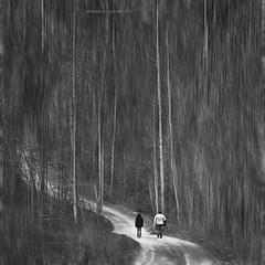 il viaggio (pamo67) Tags: voyage road trees bw woman man alberi woodland square donna path walk pair bn uomo journey sentiero rs viaggio coppia bosco cammino bestcapturesaoi elitegalleryaoi mygearandme mygearandmepremium mygearandmebronze mygearandmesilver lostcontperdidos silverawardlostcontperdidos goldenawardlostcontperdidos pamo67 pasqualemozzillo