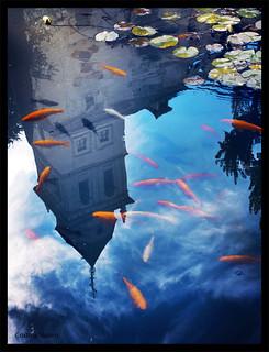 Nadando entre nubes