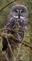 Gaia Zoo Kerkrade the Netherlands (Lorraine1234) Tags: nature animal animals zoo thenetherlands owl owls zoopictures canon7d