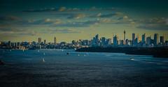 Sydney City Evening