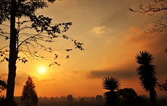above the city (Ruby Ferreira ) Tags: sunset prdosol silhuetas silhouettes city cidade prdios buildings trees
