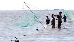 Pche au carrelet (perispomene) Tags: pchepied carrelet pcheurs mare maremontante tide risingtide