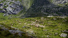 Aprica (SO) - Lago di Pisa (Giorsch) Tags: italia italy italien lombardia lombardei langbeardnaland provinciadisondrio aprica alpi alps alpen estate summer sommer montagne mountain berge landscape landschaft alpensee lake lago lagodipisa orobievaltellinesi orobie outdoor lagobelviso magnolta malgamagnolta parcodelleorobievaltellinesi sentiero hiking mountainhiking mountainbiking mulattiera saumpfad cascata wandern wanderweg wasserfall waterfall malganembra schafe pecore ovisaries mouton oveja gregge funivia funiviamagnolta