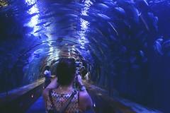 Ocanografic de Valencia (aquarium) (gwennaelle.masle) Tags: valencia espaa espagne valence city ciudad sun soleil oceanografic aquarium poisson fish