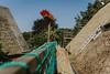 Till_Junker_20160914-_ILL4761 (till_junker) Tags: reetdach reetdachdecker dachdecker handwerk stade reetdachdeckerjunker reetdachhaus junker stadehagen landkreis natur umwelt nature handmade