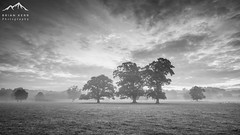 Mistful Morning - In Mono (.Brian Kerr Photography.) Tags: none cumbria edenvalley lazonby photography mono blackandwhite mistymorning trees misty briankerrphotography briankerrphoto wexmondays