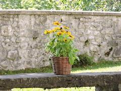 31 August 2016 (keepps) Tags: switzerland suisse schweiz summer saanen bern 365photos flower bench stone wall