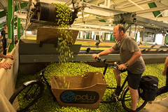 Hop Century Ride 2016 (buen viaje) Tags: goshiefarms goshiehopsfarm hopcenturyride2016 metrofiets oregon2016 basecamp bikes brewery breweryproject cargobikes hops hopsfarm oregon freshhops mertofiets basecampbrewery beer freshhopcentury2016 geercrestfarm goshiefarmsgoshiehopsfarmhopcenturyride2016metrofietsoregon2016basecampbikesbrewerybreweryprojectcargobikeshopshopsfarmoregon