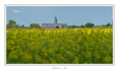the church. (Tom Baetens) Tags: 70300mm tombaetens belgium church d610 landscape nikon outdoor rapeseed sky yellow