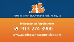 Welcome to Two Dogs and a Cat (twodogsandacat) Tags: veterinary veterinarian animals cats dogs surgery dentistry dentist boarding health pet pets clinic grooming bathing