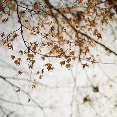 I wish.. (childishToy*) Tags: hasselblad503cx autumn leaves film analog jeonju kodak portra400vc photography