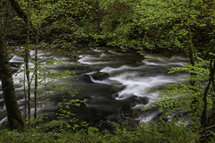 little rapids (mamuangsuk) Tags: littlerapids rapides forestcreek gorgesdelareuse stream flowingwater smoothcottonwater waterinmovement eauenmouvement acquainmovimento slowshutterspeed tripod nature greenleaves moss lichens woods foret foresta 6d 1740l mamuangsuk