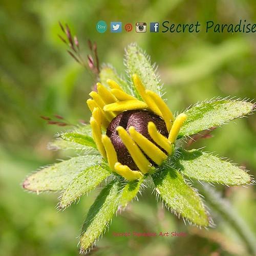 An eye-opener this morning found in a #SecretParadise! :) #newengland #photography #flowerlover #garden #artwork #weddinggifts #naturephotography #natureshots  #parks