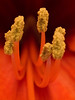 (THX4711) Tags: flower macro nature colors flora dof blossom co naturesfinest ruby2 coth bej fineartphotos abigfave diamondclassphotographer flickrdiamond floraandfaunaoftheworld natureselegantshots rubyphotographer