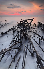 Kelanang's Story - Garisan-Garisan Biasa (Syafiqjay) Tags: sunset nature lines landscape nikon january mangrove 2012 waterscape cokin seascpae 2013 pantaikelanang photofibre syafiqjay kelanangsstory