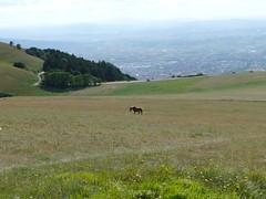 Panorama dal Monte Subasio - Assisi (sanpotente) Tags: italy panorama colour verde trekking relax italia hiking hill romantico assisi paesaggio umbria colline oliveto agriturismo passeggiata passeggiate oliveharvest umbrien pascolo ombrie rilassante agriturismoumbria agriturimoumbria