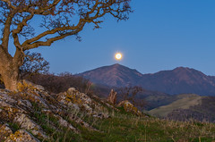 diablo moonset (Marc Crumpler (Ilikethenight)) Tags: california morning trees winter usa moon mountains green grass sunrise landscape twilight shadows pentax hiking trails hills bayarea eastbay mtdiablo k5 ebrpd roundvalley contracostacounty eastbayregionalparkdistrict ebparks megashot ilikethenight marccrumpler ebparksok pentaxk5 pentax60250