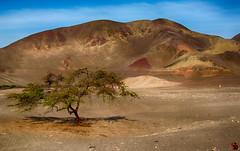 IMG_078 (Fabio Robba) Tags: panorama canon desert per lanscape nazca alberotree