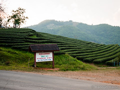 Tea Plantation (Harris' Photos) Tags: thailand southeastasia chiangrai maesalong chineseteaplantation