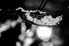 Bracelet Bokeh (k.bartzsch) Tags: winter white snow storm black art ice nature sepia nikon finding nemo bokeh 40mm split nikkor flakes wonderland tone 28g d5100