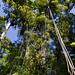 Molti alberi hanno liane (Los Quetzales)