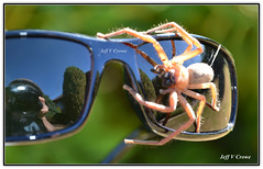 MY SPIDER FRIEND (Jeff Crowe) Tags: