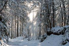 proga_02 (gregork.) Tags: blue houses winter sky panorama house snow mountains tree forest landscape hill slovenia slovenija zima could gora februar selo sneg vodice landsscape hrib panoramio gozd drevo 2013 hladno hiša rašica